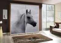 Kôň 2